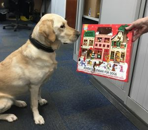 TPS Office Dog Blair with her advent calendar