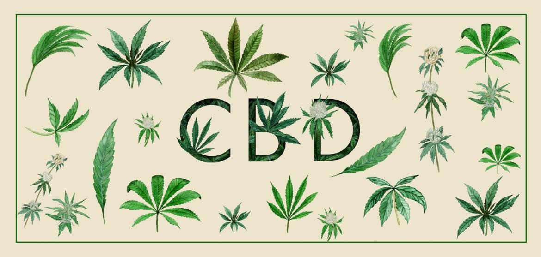 CBD industry