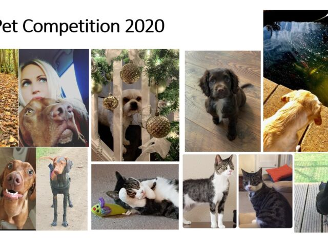 TPS-Global-Logistics-Pet-Competition